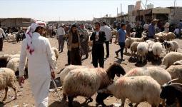 سوق الأغنام في دير الزور