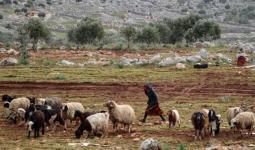رعاة أغنام في سوريا - تعبيرية