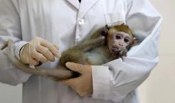 أخصائي يحمل قرد