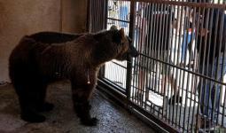 سينقلان إلى محمية الحيوانات البرية في كولورادو
