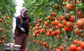 تواصل روسيا رفع كمية استيراد الطماطم من تركيا